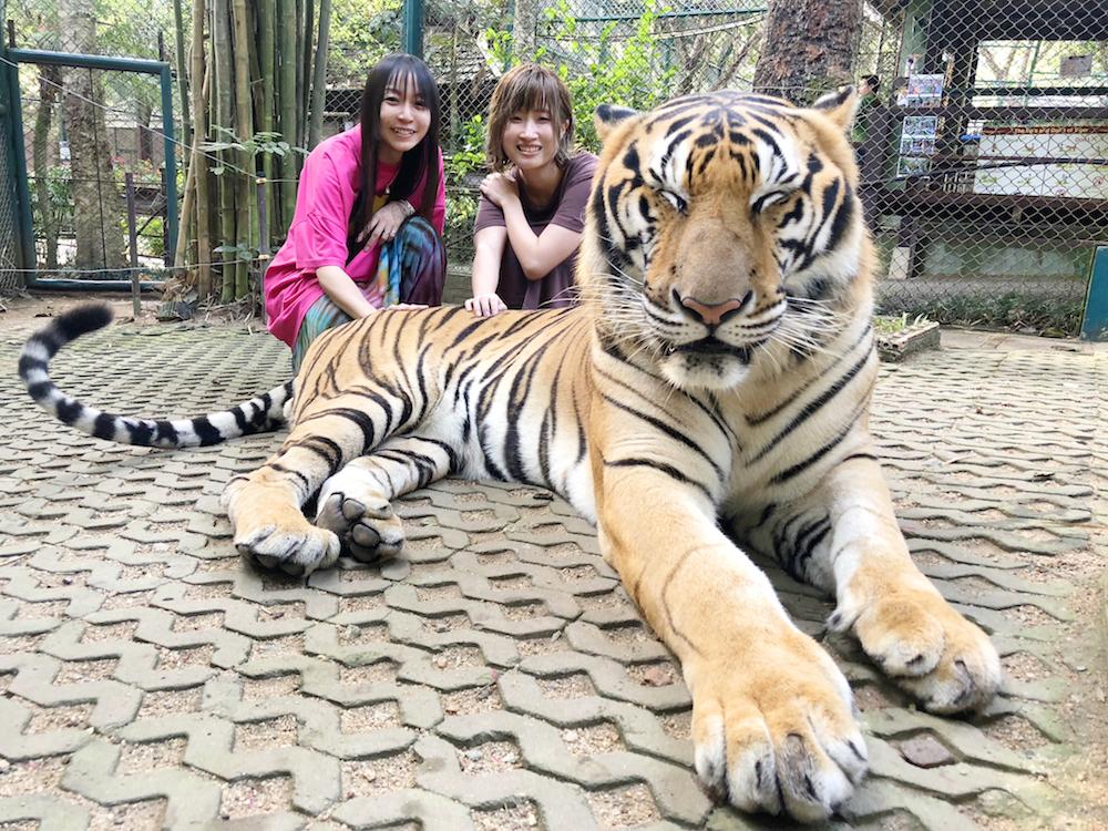 【タイ滞在3日目①】トラに会いに行くよ♡日帰り超弾丸チェンマイ!!!