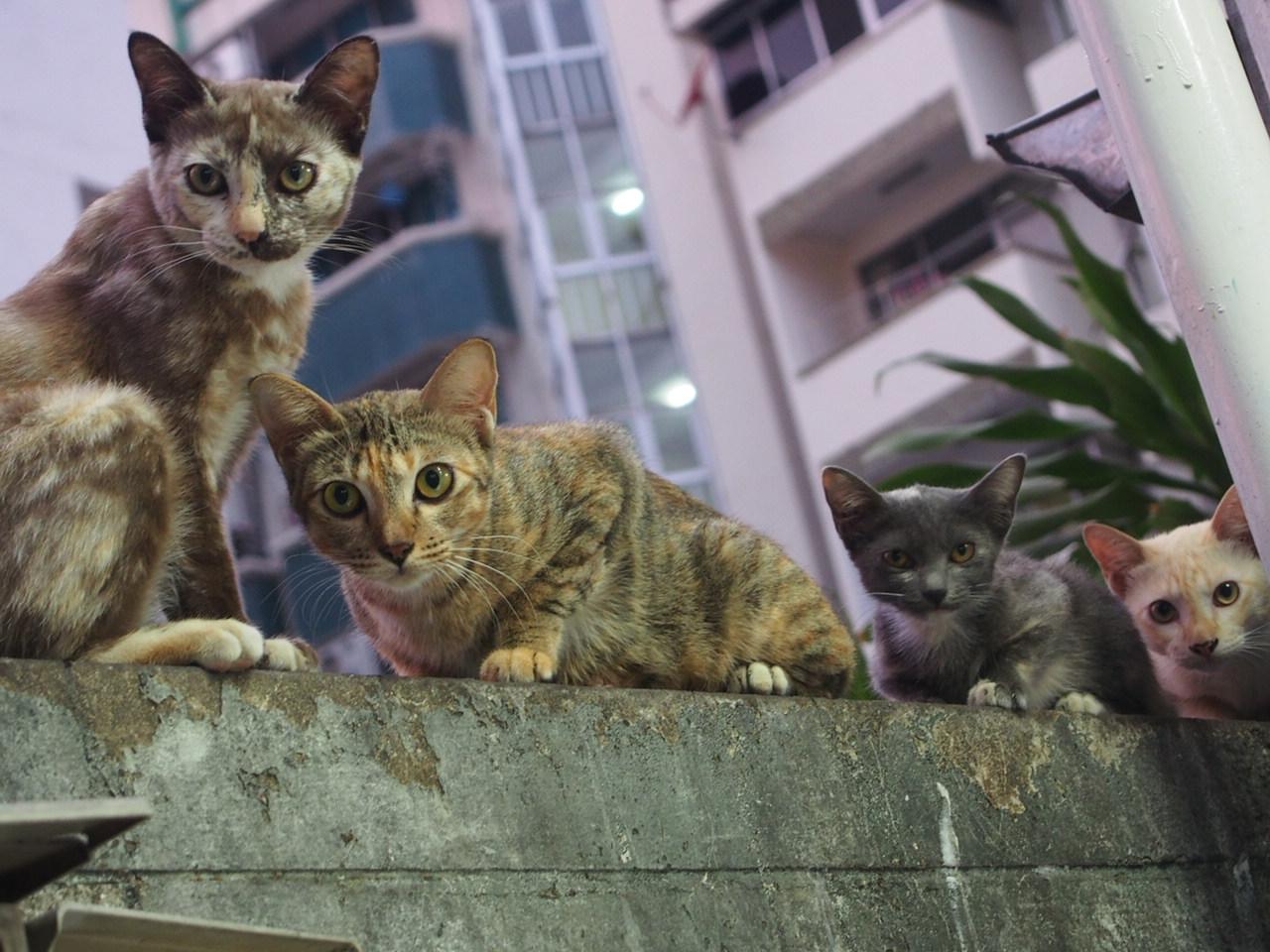 バンコクの街ネコたち