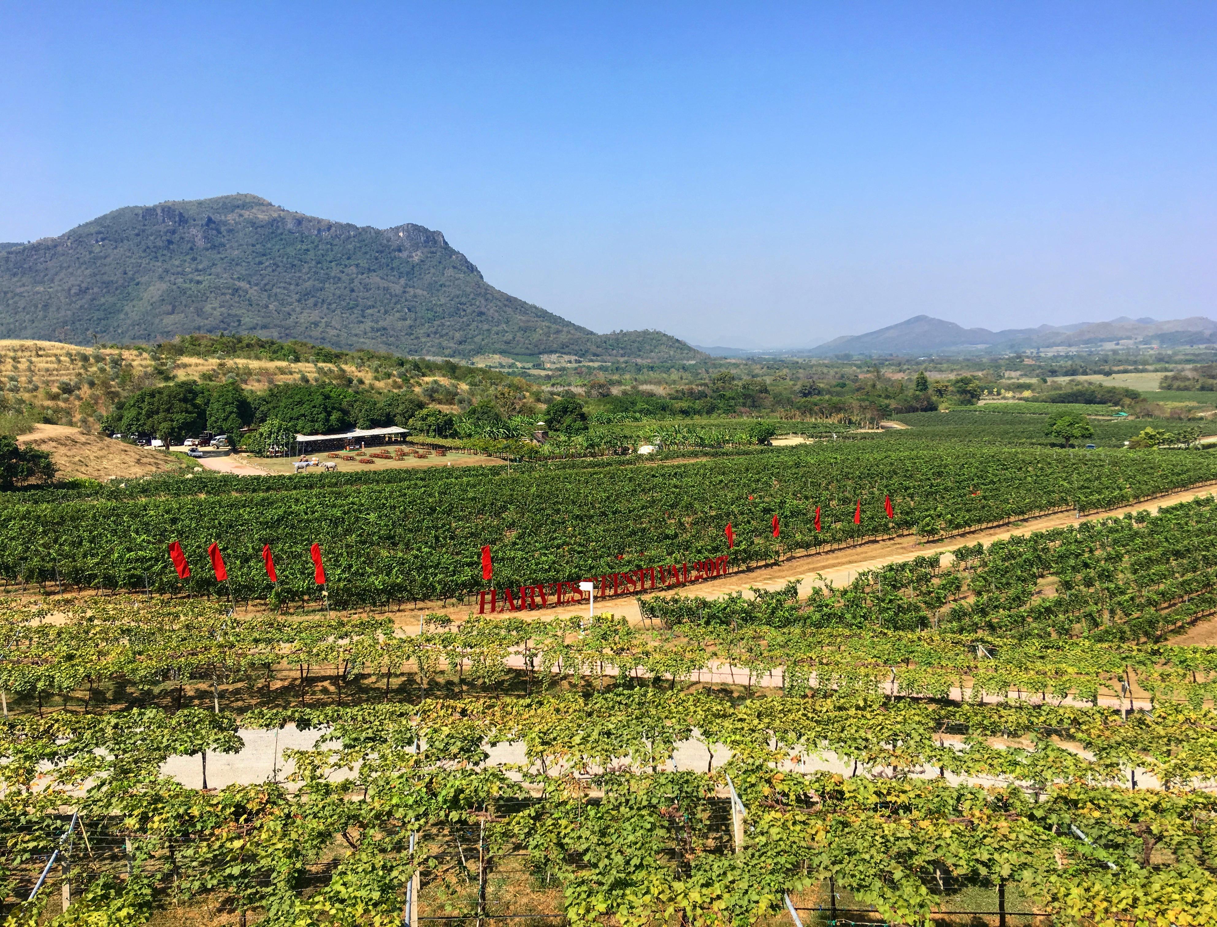 HuaHin Winery Vineyard Tour1日目