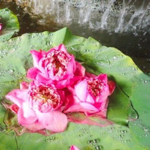 親子三世代の家族旅はぜひバンコクへ♪5つの魅力をご紹介♡