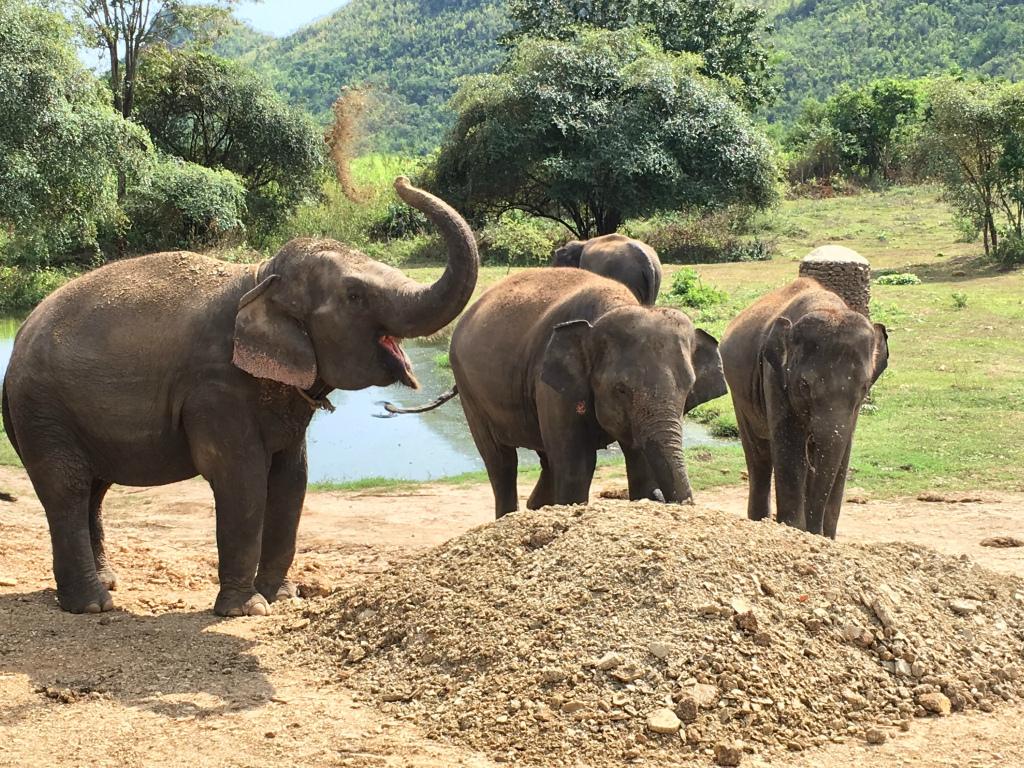 バンコクから約2時間。カンチャナブリの保護施設で象と触れ合う旅